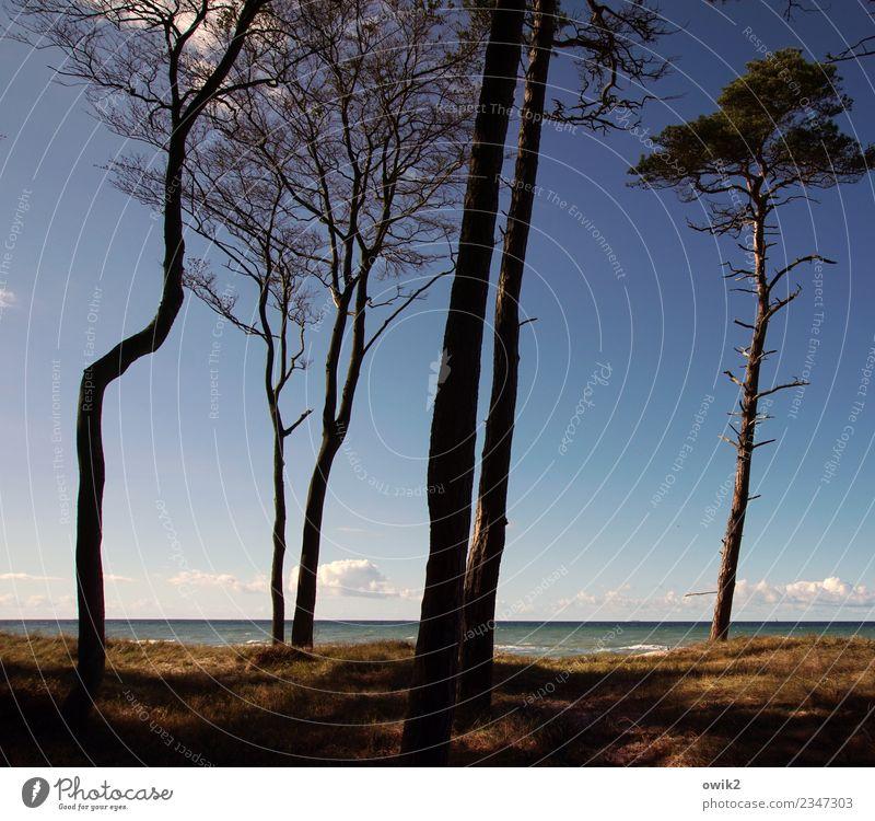 Die da oben Himmel Natur Pflanze blau Landschaft Baum Wolken ruhig Ferne Umwelt Herbst Gras Zusammensein Horizont Wachstum Idylle