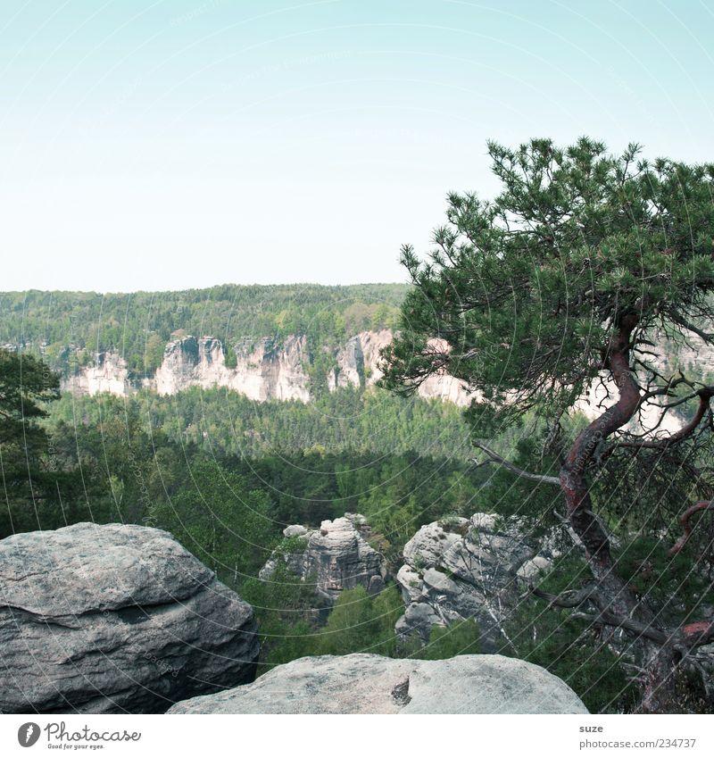 Wildwuchs Ferne Freiheit Berge u. Gebirge Umwelt Natur Landschaft Himmel Wolkenloser Himmel Klima Pflanze Baum Wald Felsen authentisch wild grün