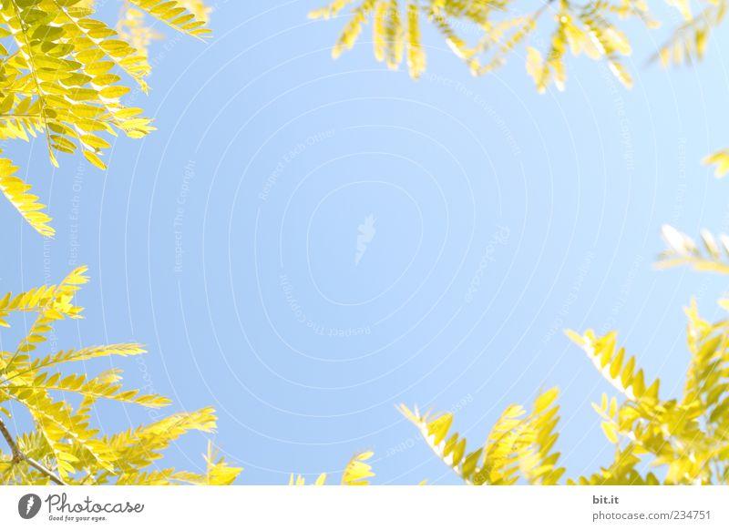 Essigbaum Himmel Natur Ferien & Urlaub & Reisen blau Pflanze grün Sommer Blatt Umwelt gelb Frühling Hintergrundbild Luft Geburtstag Ecke Hochzeit