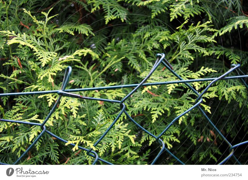zoff am zaun Natur grün Pflanze Wachstum Sträucher Zaun Grenze Barriere Hecke Grünpflanze Baum Gartenzaun Gärtnerei winterfest Maschendrahtzaun Maschendraht
