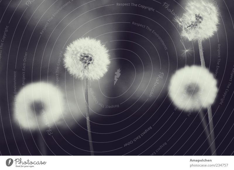 ::11-9:: Natur Pflanze Sommer ruhig Umwelt Wiese Freiheit träumen fliegen Wetter Zufriedenheit Wind Klima ästhetisch Zukunft Blühend