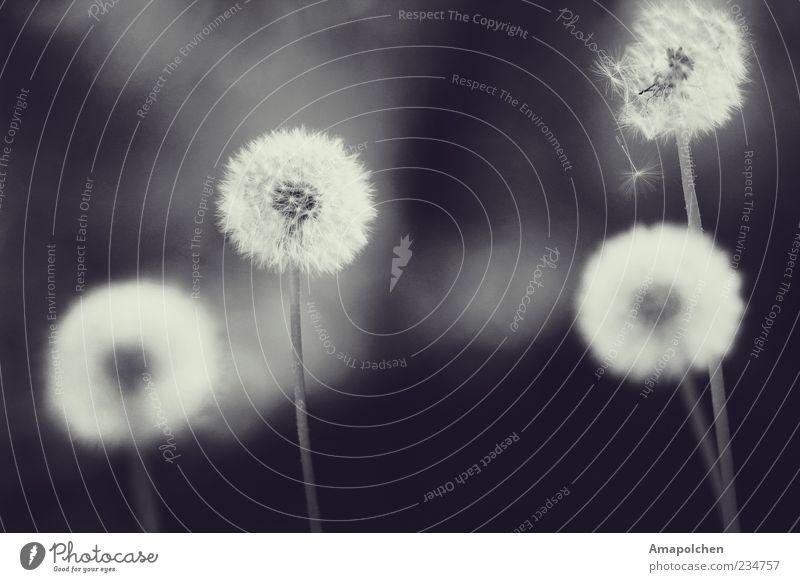 ::11-9:: Umwelt Natur Sommer Wetter Wind Pflanze Wiese Blühend verblüht Zufriedenheit Lebensfreude ruhig beweglich unbeständig ästhetisch Klima träumen Verfall