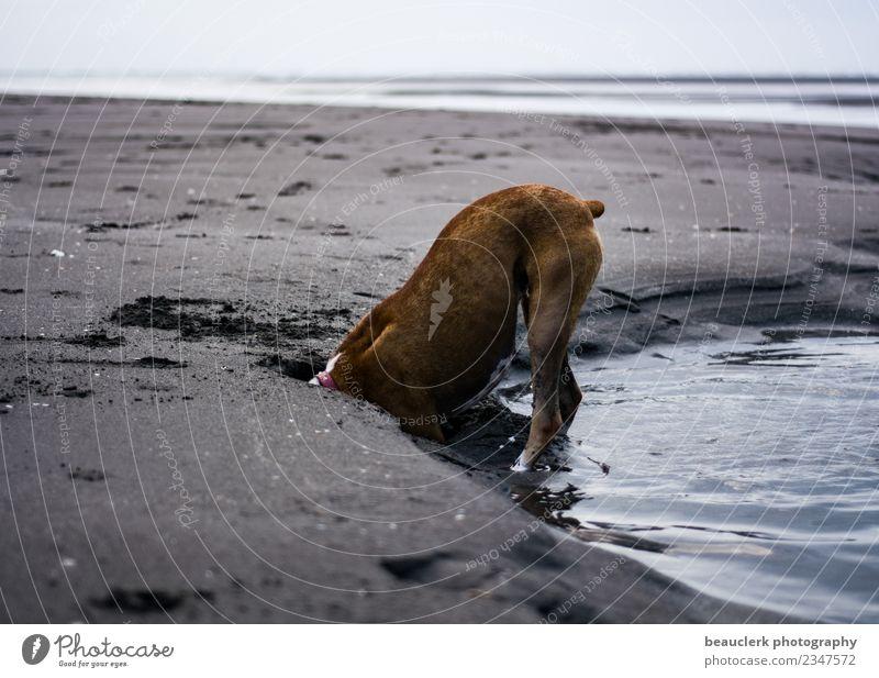 Suche Lifestyle Ferien & Urlaub & Reisen Tourismus Ausflug Abenteuer Sommer Umwelt Natur Tier Sand Wasser Küste Strand Bucht Meer Insel Haustier Hund Pfote 1