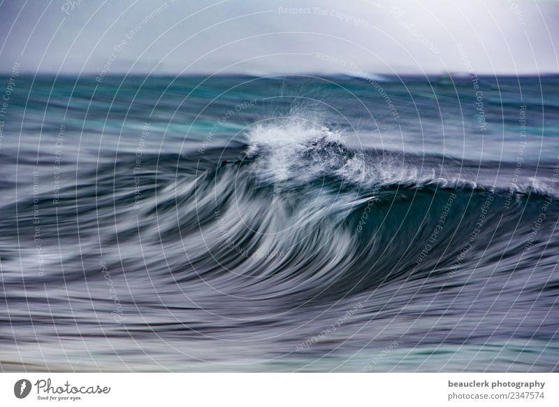 Dynamik Wassersport Segeln Brandung Wasseroberfläche Hawaii Northshore Beach Natur Landschaft Korallenriff Meer Insel genießen Spielen Freude schön Wahrheit