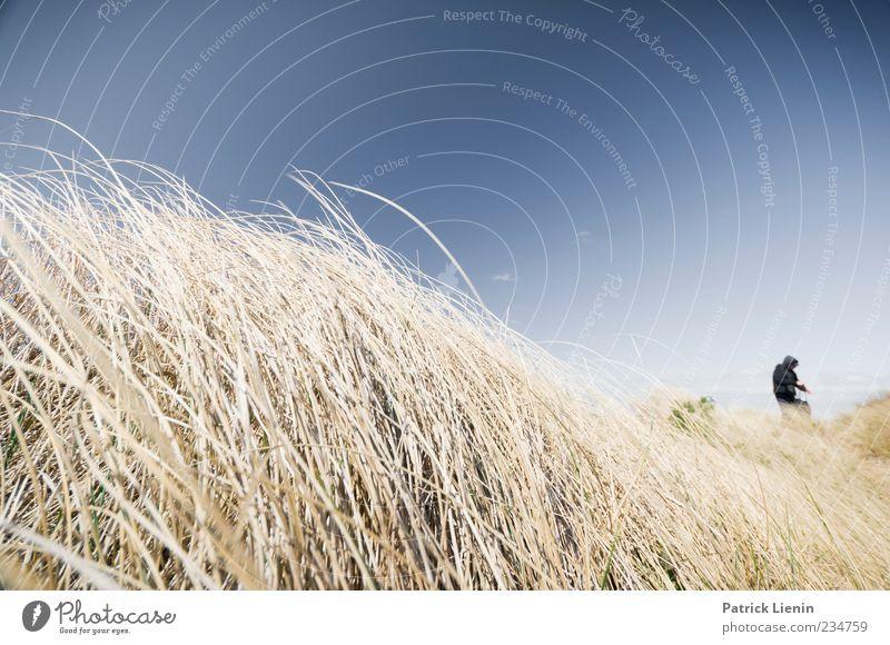 Dünenspaziergang Mensch Himmel Natur blau Ferien & Urlaub & Reisen Sommer Strand Umwelt Landschaft Freiheit Stimmung Wetter Wind Freizeit & Hobby wandern