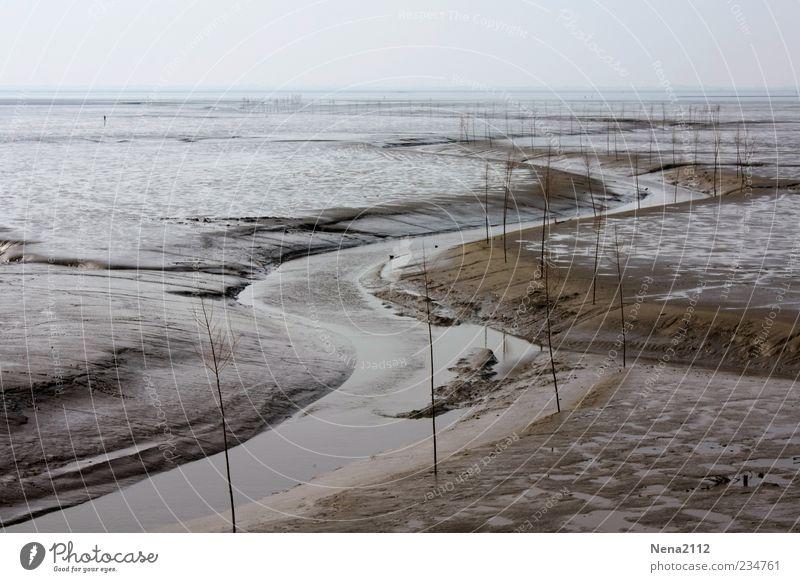 Serpentin marin Natur Landschaft Sand Wasser Horizont Küste Flussufer Strand Nordsee Meer braun grau Flut Ebbe Gezeiten Wattenmeer Priel Flußbett Niedrigwasser