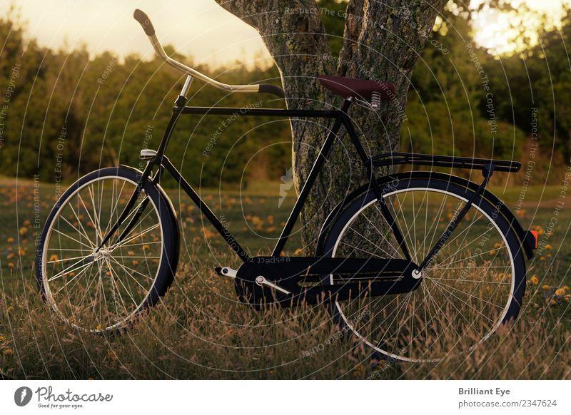 Fahrrad Parkplatz Lifestyle Freizeit & Hobby Ferien & Urlaub & Reisen Ausflug Freiheit Fahrradtour Sport Fahrradfahren Natur Landschaft Wiese Feld Wald einfach