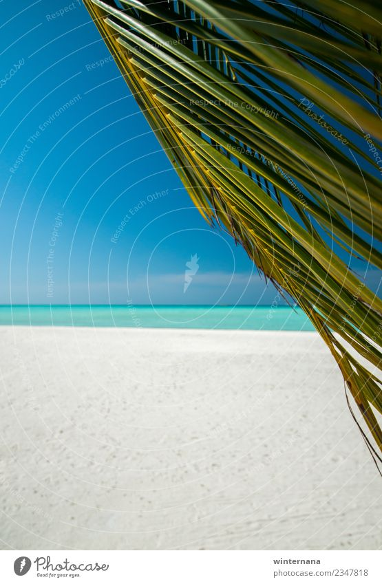 Das Leben genießen beste Zeit grün Palme weißer Sand rein Wasser Aquamarin Kristalle übersichtlich türkis Wind Sonne Sonnenschein loce Freude Vakanz