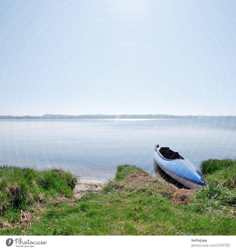 an der schlei Natur Wasser Pflanze Ferien & Urlaub & Reisen Sommer Meer ruhig Ferne Umwelt Landschaft Freiheit Küste Luft Freizeit & Hobby Klima Ausflug