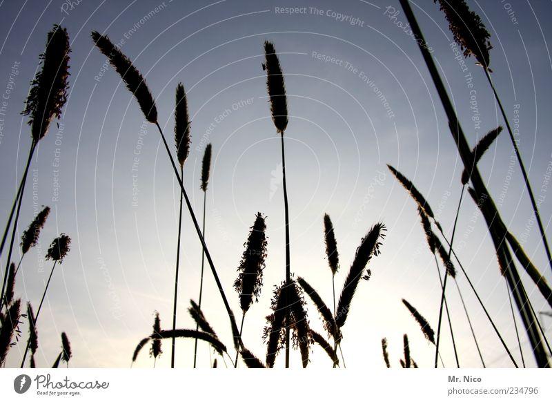 sonnenanbeter Natur Pflanze Sommer Umwelt Landschaft Wiese Gras Blüte Wetter Feld Klima Wachstum Schönes Wetter Weide Stengel Halm