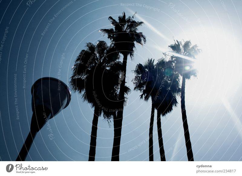 Künstliche Palme Sonne Sommer Ferien & Urlaub & Reisen ruhig Freiheit mehrere Tourismus exotisch Straßenbeleuchtung Sommerurlaub Wolkenloser Himmel südländisch