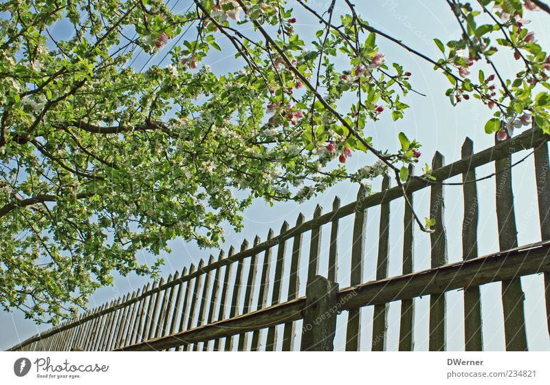 Ein Wink mit dem Zaun? Erholung ruhig Garten Umwelt Natur Landschaft Himmel Schönes Wetter Baum Blühend glänzend leuchten ästhetisch Freundlichkeit positiv