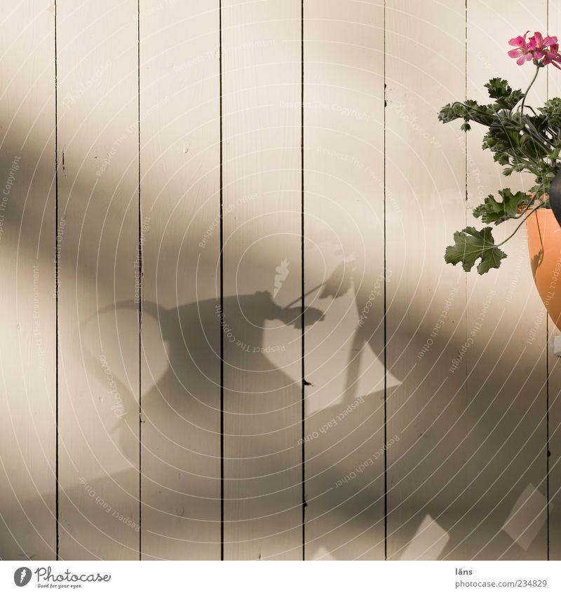 randerscheinung Hütte authentisch Blume Blumentopf Pelargonie Blatt Holzwand gestrichen Gartenhaus Blühend Farbfoto Außenaufnahme Tag Licht Schatten Silhouette