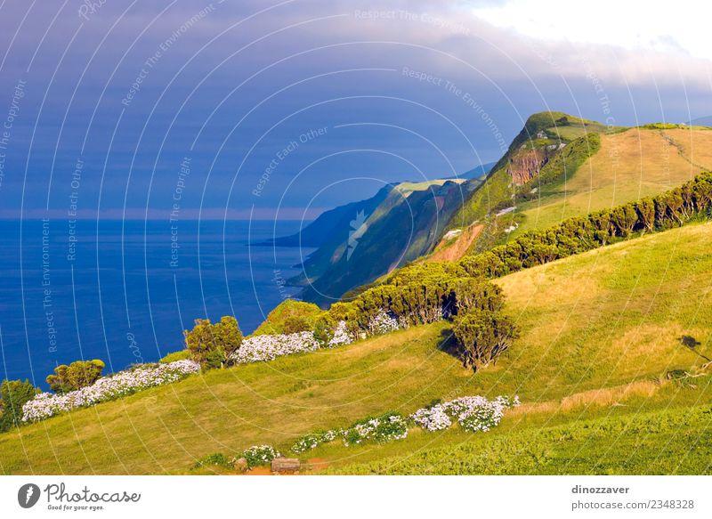 Insel Sao Jorge, Azoren schön Meer Natur Landschaft Pflanze Himmel Felsen Vulkan Küste natürlich blau grün Idylle Atlantik Klippe Küstenstreifen Bauernhof