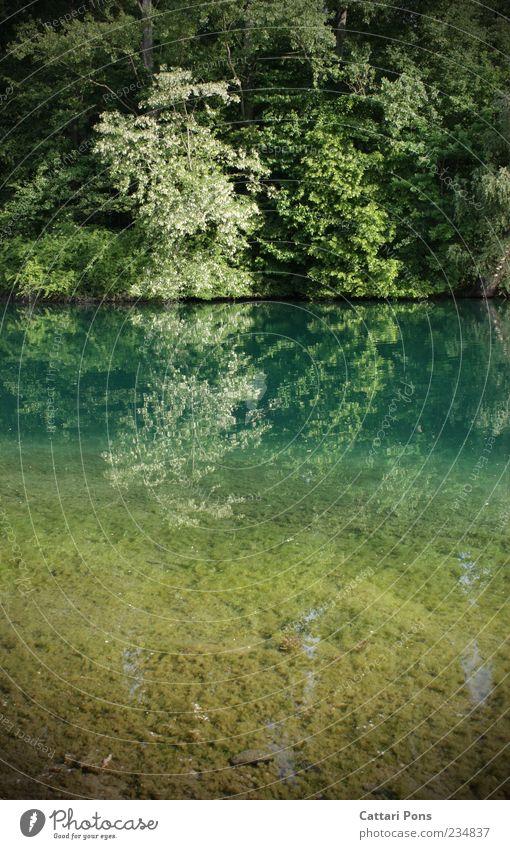 Farbwechsel Umwelt Natur Pflanze Urelemente Erde Wasser Frühling Baum Sträucher Park See Blühend Flüssigkeit kalt nass neu schön ruhig Naturschutzgebiet