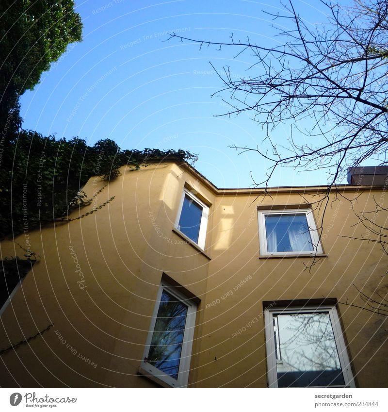 hinterhofansichten. Umwelt Wolkenloser Himmel Haus Bauwerk Gebäude Fassade Fenster blau gelb grün Perspektive Hinterhof Efeu Farbfoto Menschenleer