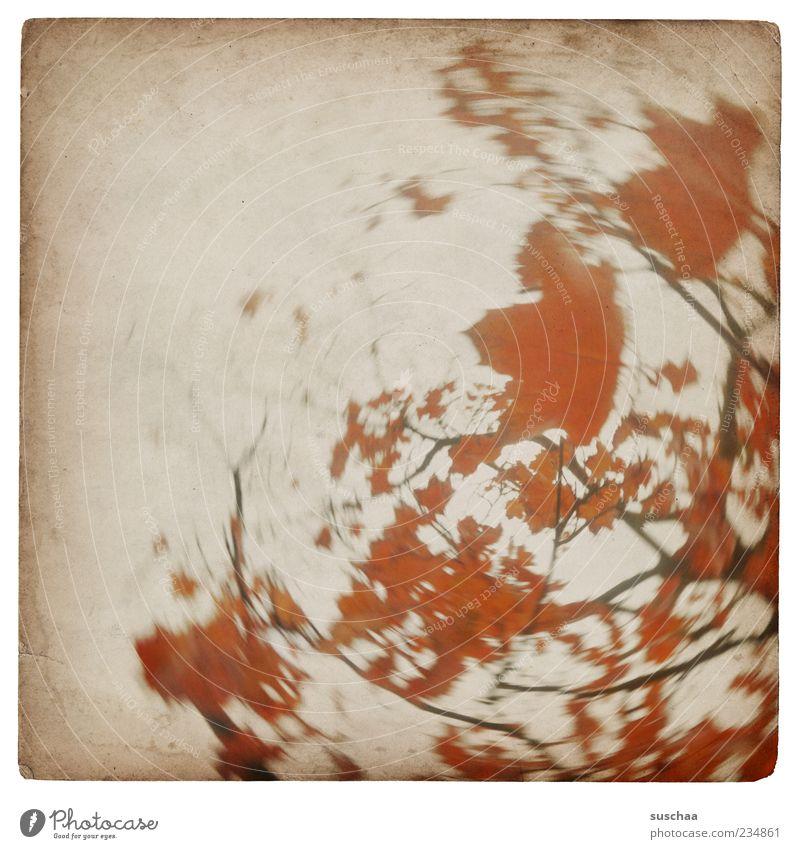 wackelbaumbild .. Himmel Natur Baum rot Blatt Herbst Kreis rund Ast drehen