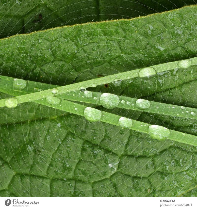 Grün Natur Wasser grün Pflanze Sommer Blatt Gras Frühling Linie nass Wassertropfen Tropfen Tau Halm Grünpflanze aufeinander