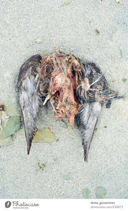 Natur Strand Tier Sand Vogel Küste nass Wassertropfen Schmerz Bucht Ekel Aggression Totes Tier