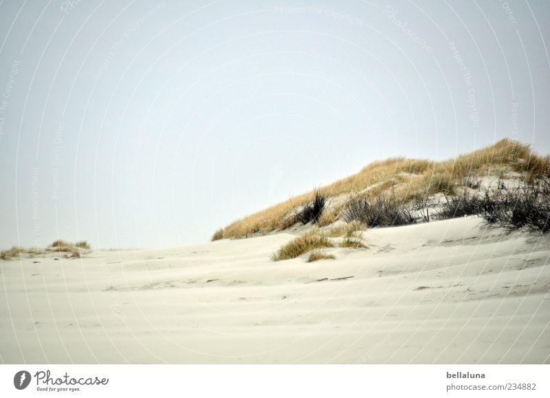 Spiekeroog | Eine Düne für Läns. Umwelt Natur Landschaft Pflanze Sand Himmel Wolkenloser Himmel Schönes Wetter Wärme Wildpflanze Küste Strand Nordsee Meer schön