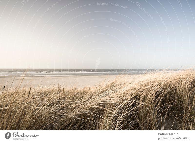 Spiekeroog | Meer fühlen Himmel Natur blau Pflanze Sonne Strand Ferne Umwelt Landschaft Gras Sand Küste Stimmung Horizont Wetter