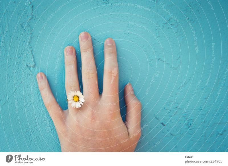 Handzeichen Pflanze Frühling Blume Blüte Schmuck Ring natürlich blau Umweltschutz Gänseblümchen Wand zart Putz umweltfreundlich Farbstoff Ringfinger feminin