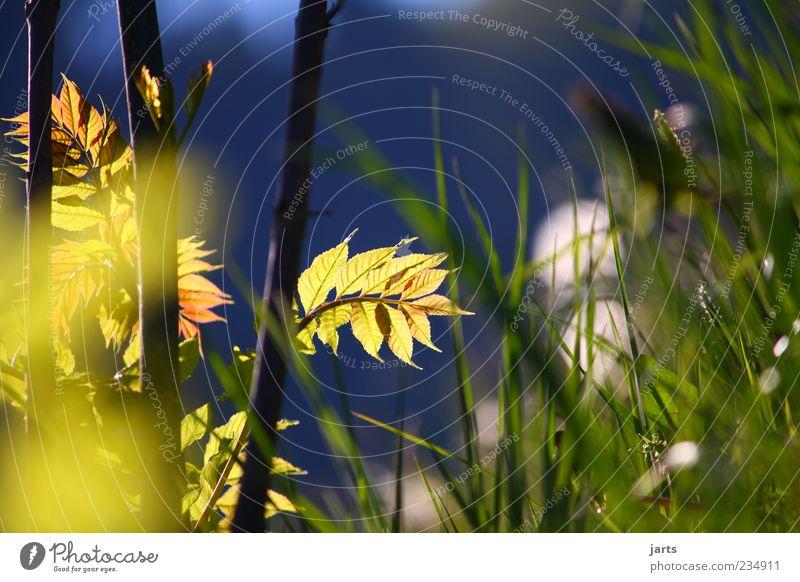 pur Natur Pflanze Frühling Sommer Schönes Wetter Gras Sträucher Erholung frisch hell schön ruhig Farbfoto Außenaufnahme Menschenleer Textfreiraum rechts