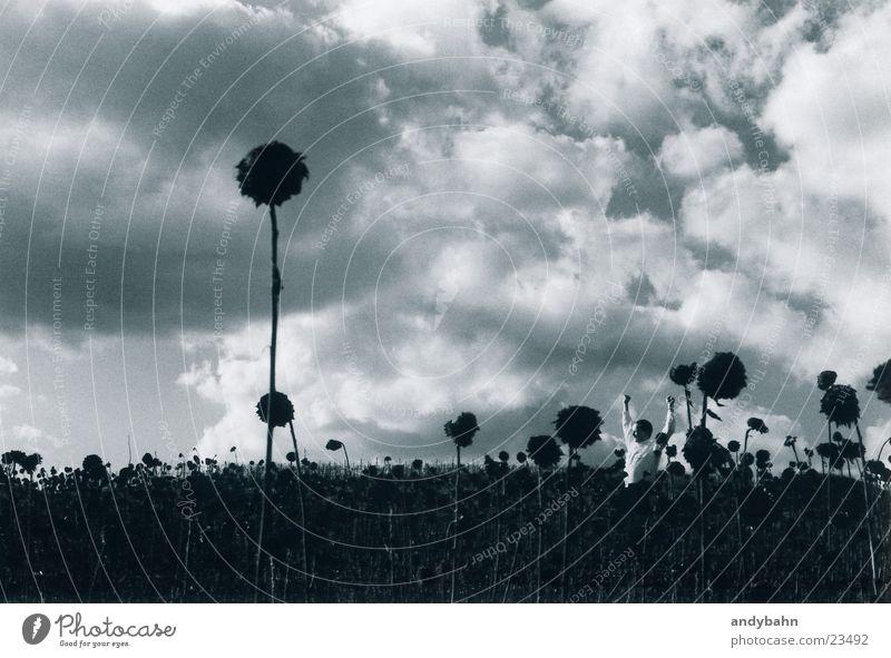 big big world Mann Natur Himmel Wolken klein groß Sonnenblume verblüht