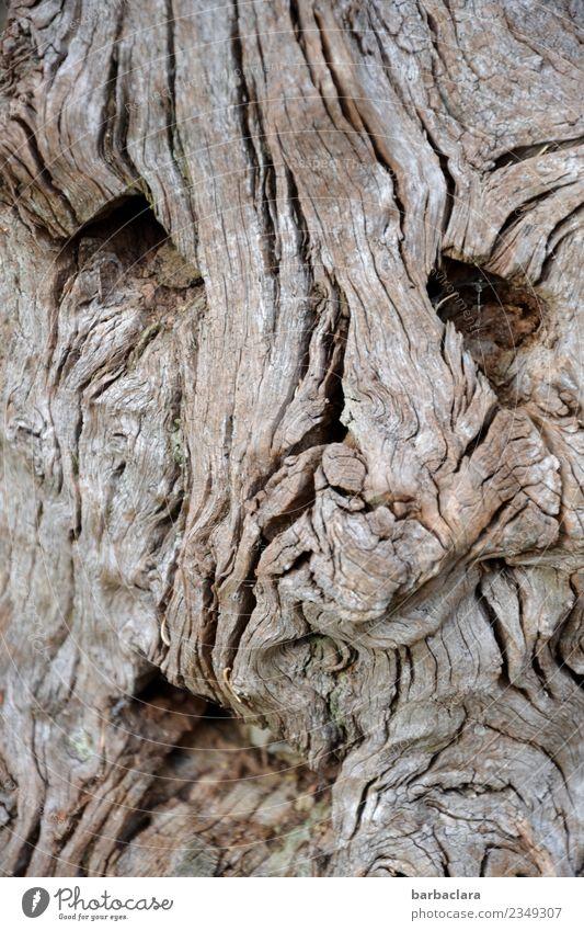 fürchterlich l knorriger Wurzelmann Natur Baum Gesicht Umwelt Holz außergewöhnlich Linie Lächeln Klima bizarr Sinnesorgane