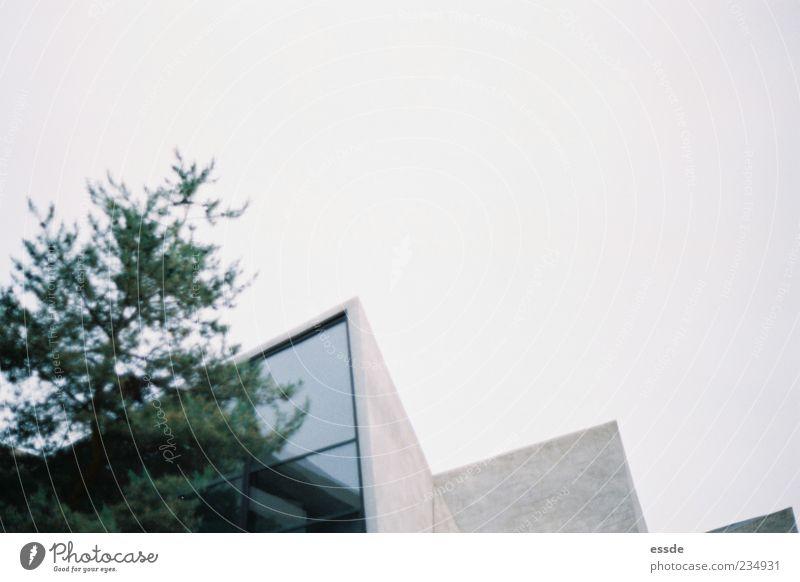oben ohne Himmel Wolkenloser Himmel Baum Gebäude Architektur Fenster Beton atmen stehen bedrohlich eckig kalt trist grau grün Verschwiegenheit ruhig Einsamkeit