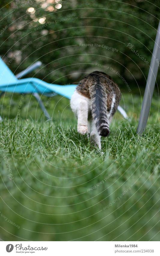 Adios Katze Natur Tier Wiese Garten gehen rennen Fell Schönes Wetter Jagd Haustier Flucht Pfote Schwanz Liegestuhl schleichen