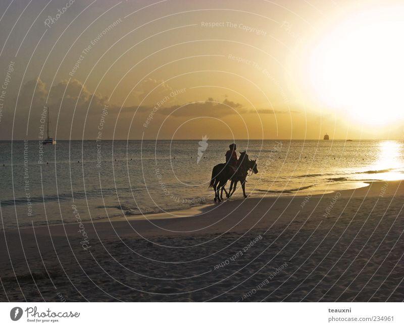 easy rider Reiten Reitsport Mensch 2 Sonnenaufgang Sonnenuntergang Strand Meer Karibisches Meer Pferd Tier Romantik ruhig Abenteuer ästhetisch Erholung Farbfoto