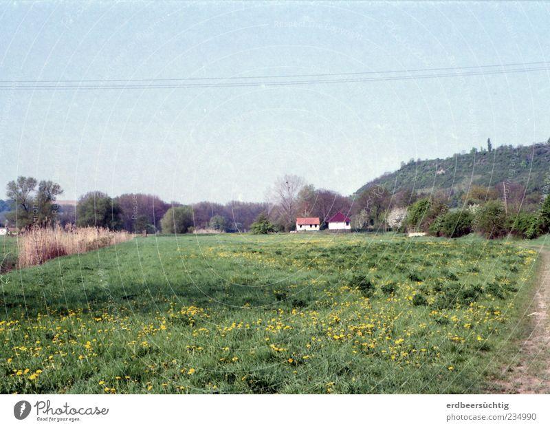 Knopfhäusle Natur grün Baum Pflanze Blume Haus ruhig Landschaft Wiese Gras Frühling Sträucher Dorf ländlich Einfamilienhaus