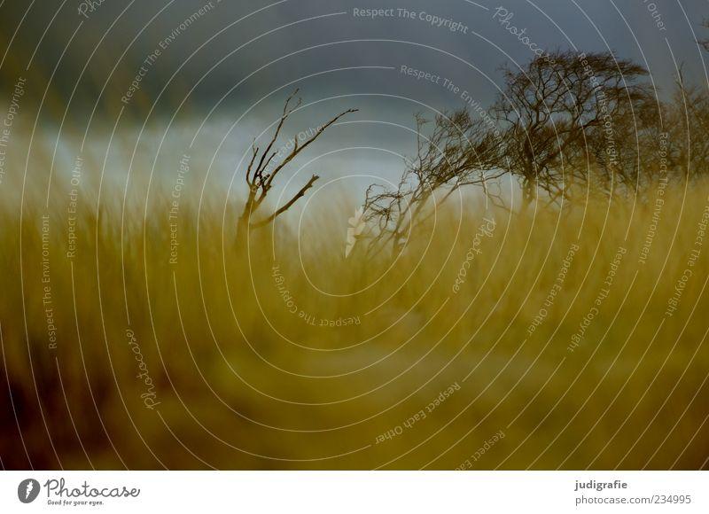Weststrand Umwelt Natur Landschaft Pflanze Himmel Wolken Gewitterwolken Klima Baum Gras Sträucher Küste Ostsee natürlich wild Stimmung Vergänglichkeit Darß