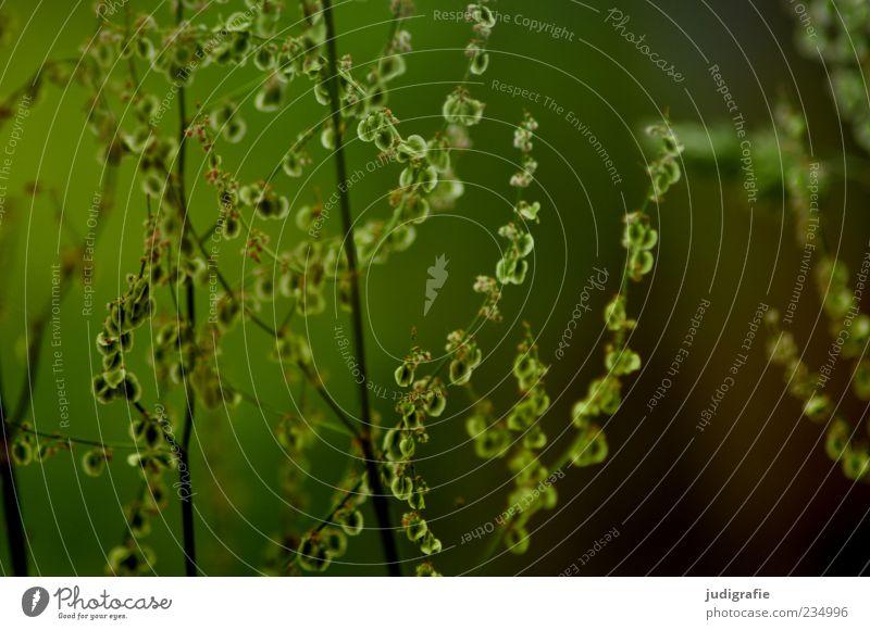 Wiese Natur grün Pflanze Sommer Blatt Umwelt Gras wild natürlich frisch Wachstum zart Stengel Halm Grünpflanze Zweige u. Äste