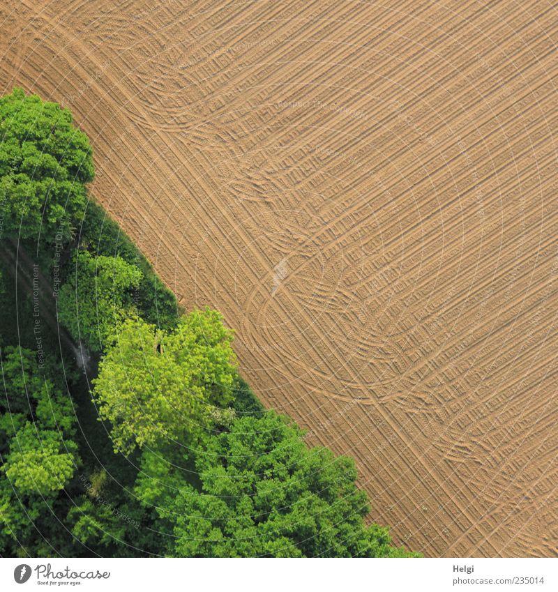 Spuren... Umwelt Natur Landschaft Erde Schönes Wetter Baum Sträucher Feld Wald Wachstum ästhetisch authentisch außergewöhnlich einfach natürlich braun grün