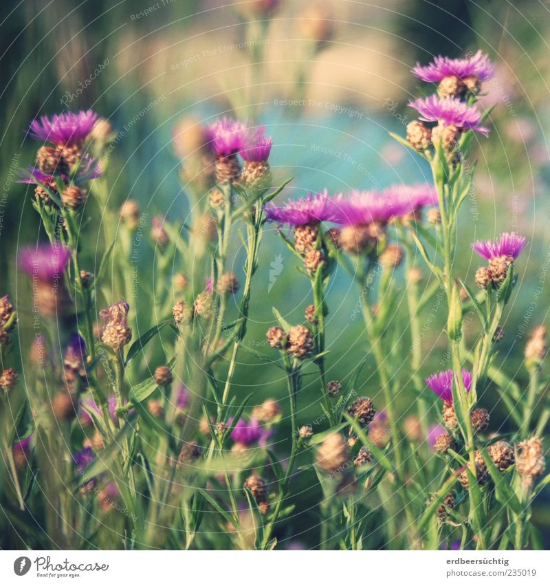 Wiesenblumen Natur grün schön Pflanze Blume Sommer Blüte rosa Wachstum Fluss natürlich violett Blühend sommerlich Sommerblumen