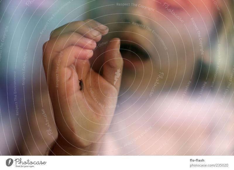 Fliegenretterin Kind Hand Tier Gesicht Spielen Fenster Fliege Neugier nah fangen Kontrolle Fensterscheibe geduldig Mensch