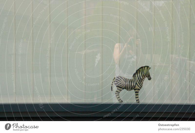 freiheitssuchend Mensch Tier Wildtier stehen beobachten Spielzeug skurril Fensterscheibe gestreift Zebra