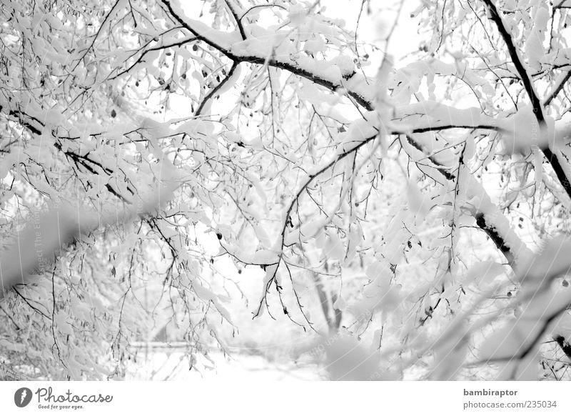 Who by water Winter Schnee Umwelt Natur Wetter Eis Frost Baum Wald frieren kalt weich weiß analog Ast Menschenleer Schwarzweißfoto Außenaufnahme