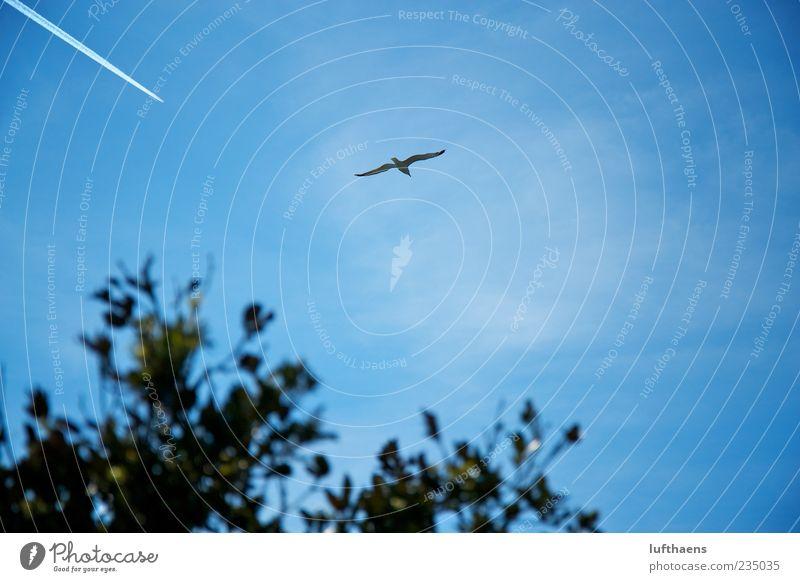 Natur vs. Technik Himmel blau weiß Ferien & Urlaub & Reisen Tier Umwelt Freiheit Luft Zufriedenheit Vogel fliegen Flugzeug frei Luftverkehr Zukunft Unendlichkeit