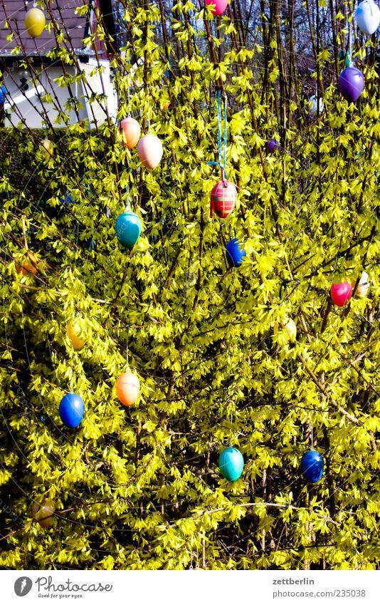 Ostern Garten Umwelt Natur Pflanze Schönes Wetter Sträucher Gefühle Osterei Dekoration & Verzierung Farbfoto mehrfarbig Außenaufnahme Menschenleer