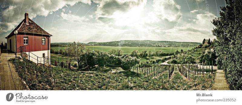 weinberge. Haus Blick Sonne Weinberg Himmel Landschaft grün Pflanze Farbfoto Außenaufnahme Tag Sonnenlicht Sonnenstrahlen Starke Tiefenschärfe