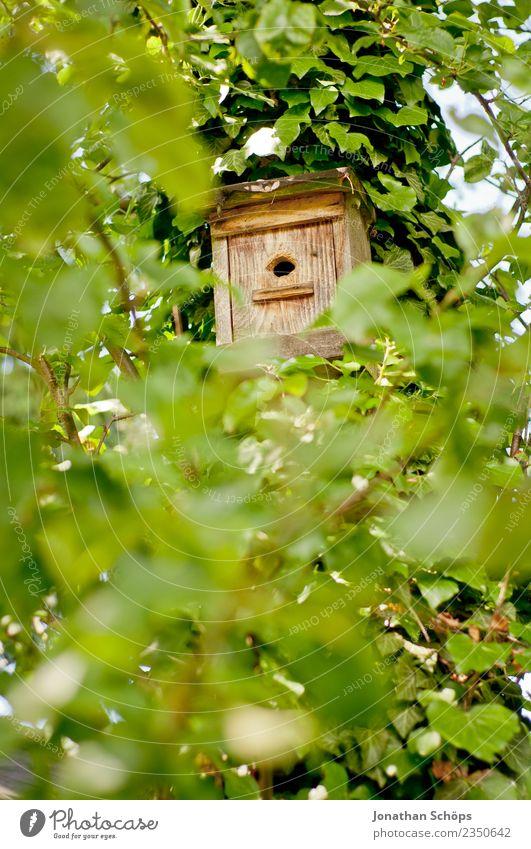 Vogelhaus in einem Baum mit grünen Blättern Natur Sommer Haus Tier Blatt Wald Leben Umwelt Garten Wohnung Beginn Durchblick Frühlingsgefühle