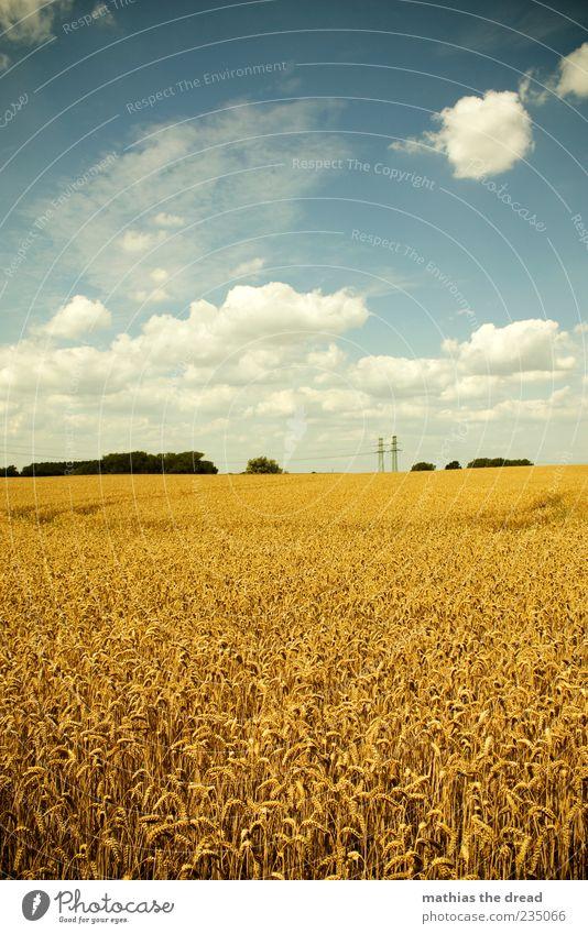 SOMMER Himmel Natur schön Baum Pflanze Sommer Wolken ruhig Ferne gelb Umwelt Landschaft Gras Horizont Feld Spuren