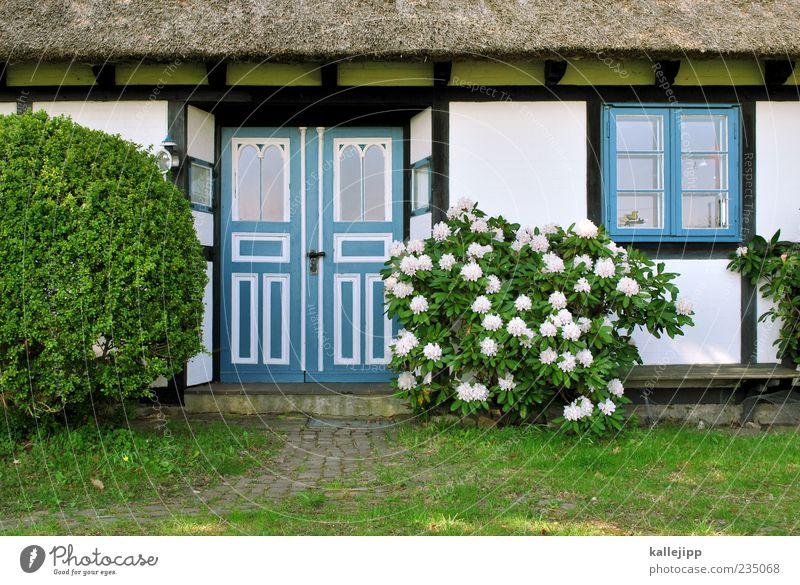 schöner wohnen Lifestyle Haus Garten Umwelt Natur Pflanze Frühling Klima Wetter Schönes Wetter Sträucher Blatt Blüte Grünpflanze Wiese Dorf Einfamilienhaus