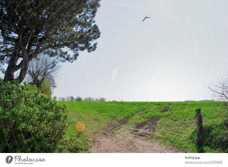 feld- und wiesenfotograf Ferne Freiheit Umwelt Natur Landschaft Pflanze Tier Himmel Wolkenloser Himmel Baum Gras Wiese Feld Vogel Flügel 1 Bewegung fliegen
