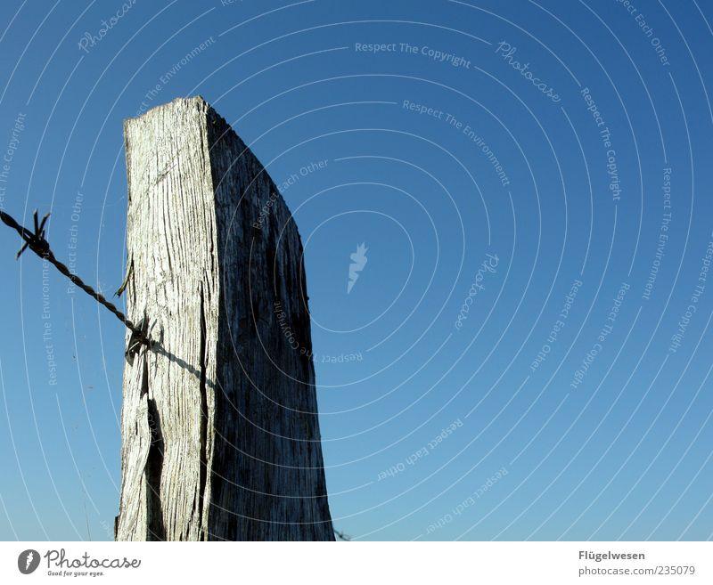 Ein Pfahl für Zwei Himmel Sommer Wolkenloser Himmel Holzpfahl Stacheldraht Stacheldrahtzaun morsch Holzzaun
