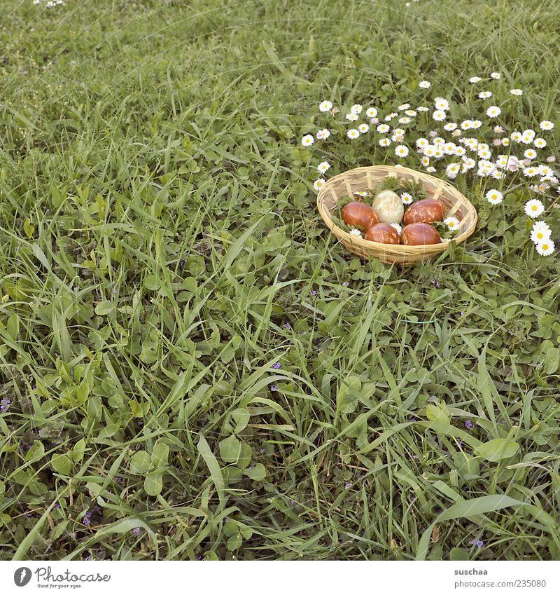 ostereierbild .. Ostern Natur Frühling Gras Wiese Tradition Osterkörbchen Osterei Blume Gänseblümchen Farbfoto Außenaufnahme Menschenleer Tag Osternest