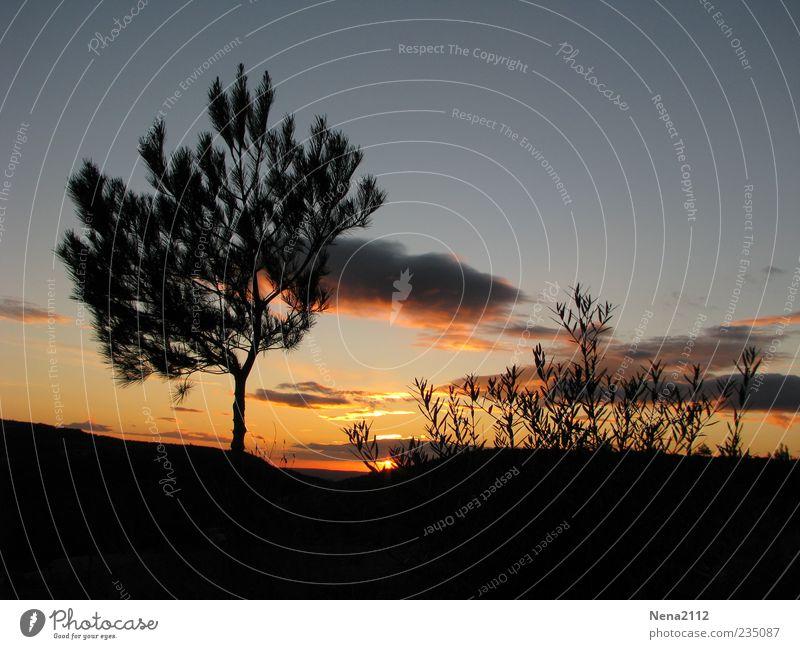 Nachtruhe Himmel Natur blau Baum Pflanze Sommer Wolken schwarz ruhig gelb Landschaft Berge u. Gebirge Luft Stimmung orange Wetter